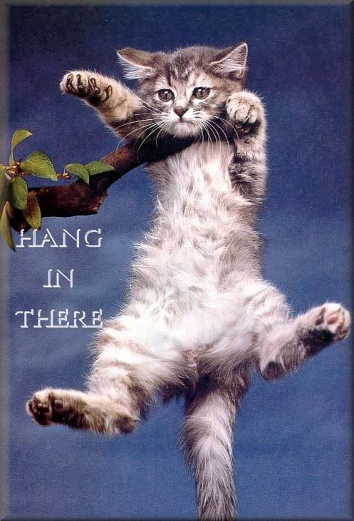 hang-in-there-cat
